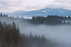 Mountain Landscape With Fir Forest And Fog Stock Photos