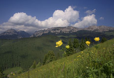 Mountain Landscape with Yellow flowers. Mountain Landscape and Yellow flowers royalty free stock photography