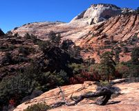 Mountain landscape, Zion National Park. Stock Photos