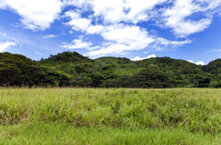 Mountain landscapes of the island of Jamaica Royalty Free Stock Photography