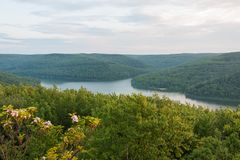 Mountain Laurel Above Lake In Pennsylvania Stock Image