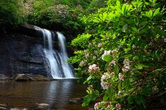 Mountain Laurel at Silver Run Falls. Silver Run Falls is located in Jackson county of Western North Carolina. The twenty-five foot waterfall is a mear .4 mile Royalty Free Stock Photos