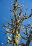 Mountain lichen. Above Alaro, Majorca, Balearic islands, Spain Royalty Free Stock Image