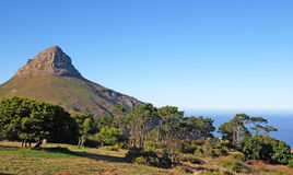 Mountain Lion's Head (Capetown,South Africa). Summer landscape with mountain Lion's Head  (Capetown ,South Africa) in the morning.The peak is part of the Table Royalty Free Stock Image
