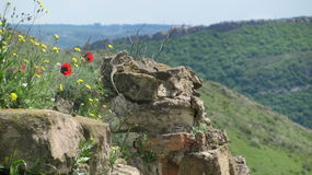 Mountain lizard. A lizard on an ancient wall over green hills in Georgia Royalty Free Stock Photos