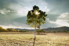 Mountain lone tree Stock Photography