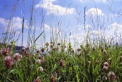 Mountain meadow stock photo