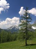 Mountain meadow. With tree and white clouds. Distant mountain in the background stock photos