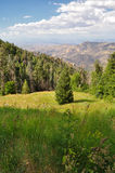 Mountain Meadow Stock Photography