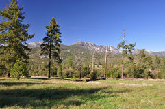 Mountain Meadow Royalty Free Stock Images