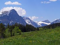 Mountain Meadow. This image of the meadow of wildflowers with the mountains in the background was taken on the eastern side of Glacier National Park in Montana Stock Photos