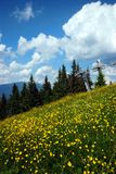 Mountain meadow. With yellow flowers,funicular cable railway on the background Stock Photography