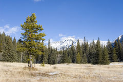 Mountain Meadow 3. A mountain meadow Stock Photo