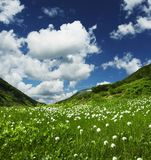 Mountain meadow Stock Photos