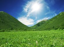 Mountain meadow. Summer meadow in sunny weather Royalty Free Stock Photos