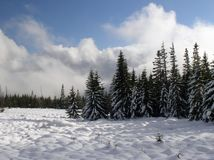 Mountain meadow. Poland. Karkonosze. Mountain meadow Royalty Free Stock Photo