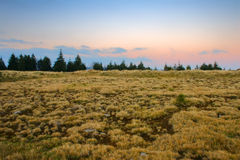Mountain meadow. Yellow field from mountain at sunset with trees and meadows stock photography