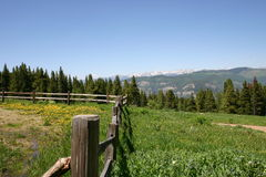 Mountain Meadow. Filled with Dandilions with a split rail fence.  Picture was taken from Camp Tigiwan, near Vail, Colorado Stock Images