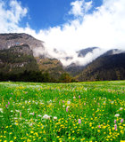 Mountain meadow Royalty Free Stock Image