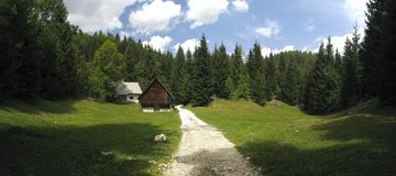Mountain meadow above Bohinj lake in Julian Alps Royalty Free Stock Photo