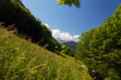 Mountain meadow in the Alps Stock Photography