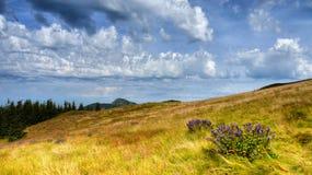 Autumn Landscape Panorama Stock Photo
