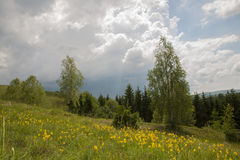 Mountain meadow. Beautiful meadow and mountain landscape Stock Photography