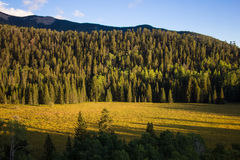 Mountain Meadow. A beautiful meadow in the middle of a mountain forest Royalty Free Stock Image