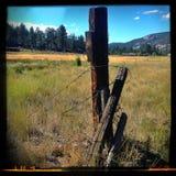 Mountain meadow. Big Bear California Royalty Free Stock Photo