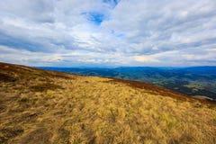 Mountain meadow in Carpathians Royalty Free Stock Photo