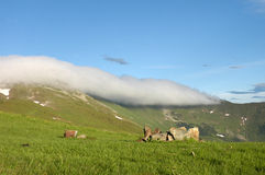 Mountain meadow and cloud bank Royalty Free Stock Images
