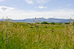 Mountain Meadow Stock Image