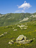 Mountain meadow covered with yellow flowers and stones in spring Stock Photos