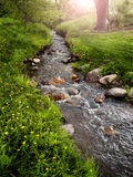 Mountain Meadow with Creek Stock Image
