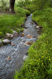 Mountain Meadow with Creek Stock Photography