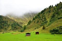Mountain meadow at Davos Royalty Free Stock Photos
