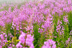 Mountain meadow in fog. Detail of foggy mountain meadow in Giant Mountains, Czech Republic Stock Images