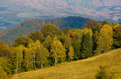 Mountain meadow and forest in autumn. With agriculture fields in background Royalty Free Stock Image