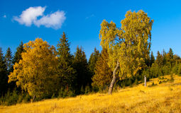 Mountain meadow with forest and trees in foreground. Pictured in autumn on clear blue sky Stock Image