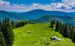 Mountain Meadow. Green grass meadow in the mountains Royalty Free Stock Photo
