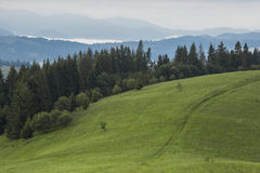 Mountain meadow with green grass, trails and forest Stock Images