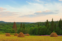 Mountain meadow with hay stacks Royalty Free Stock Photography