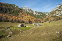 Mountain meadow. High mountains in the background Stock Photo
