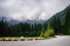 Mountain meadow in High Tatras. Small mountain meadow on the way to Morskie Oko Lake, Rybi Potok Valley, High Tatras stock image