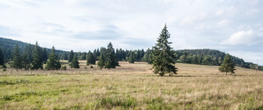 Mountain meadow with isolated tree and hill on background in Sumava Royalty Free Stock Image
