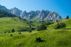 Mountain meadow. Meadows at Gornje Bare place, Sutjeska National Park, Bosnia and Herzegovina Royalty Free Stock Images