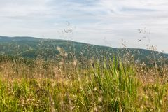 Mountain meadow. Against the sky Royalty Free Stock Image