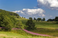 Mountain Meadow. In the mountains in Italy Stock Photo