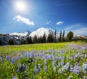 Mountain meadow Royalty Free Stock Image