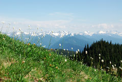 Mountain meadow in olympic stock images